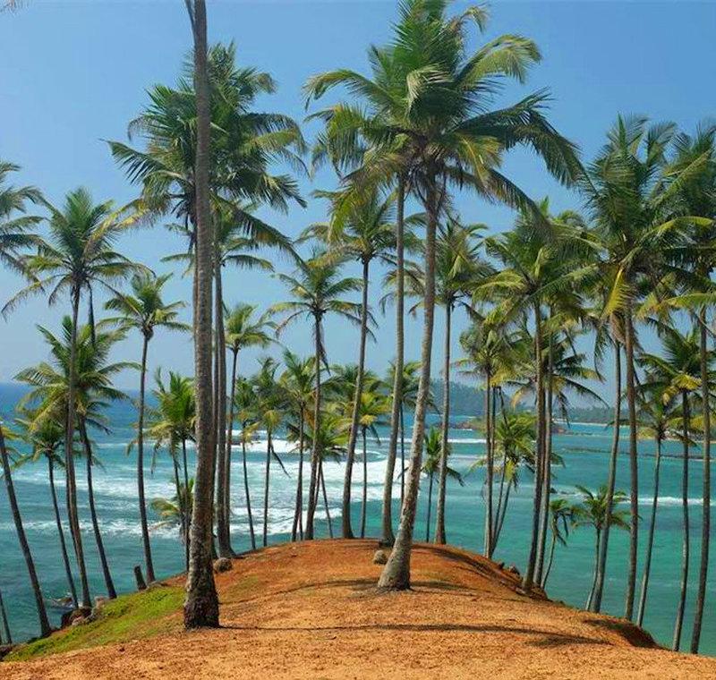 Escape Winter in Sri Lanka